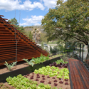 Roof Vegetable Garden Austin